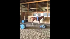 Ginger and new Equipedic Pad