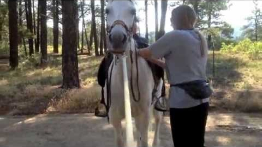 Smart Pad & Parelli Saddle System helps gaited horse move better!